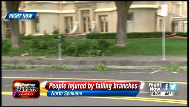 One injured by falling tree branches outside Spokane Co. Courthouse