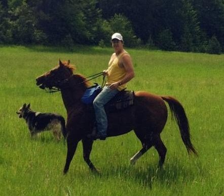 PICTURED: Diamond, the horse believed killed by a cougar