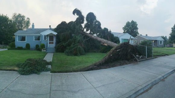 Many trees toppled over during the storm on Saturday night