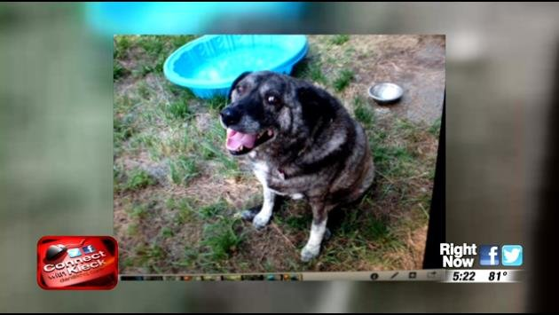 March the dog needs your help finding a new home