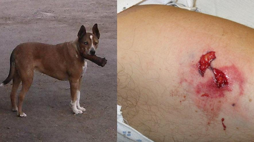 The Spokane County Sheriff's Office released the photo of the dog, as well as Deputy Smith's injuries on Thursday
