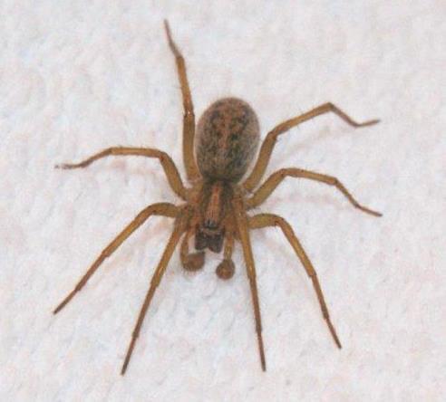 PHOTOS: Hobo Spider season has arrived - Spokane, North Idaho News ...