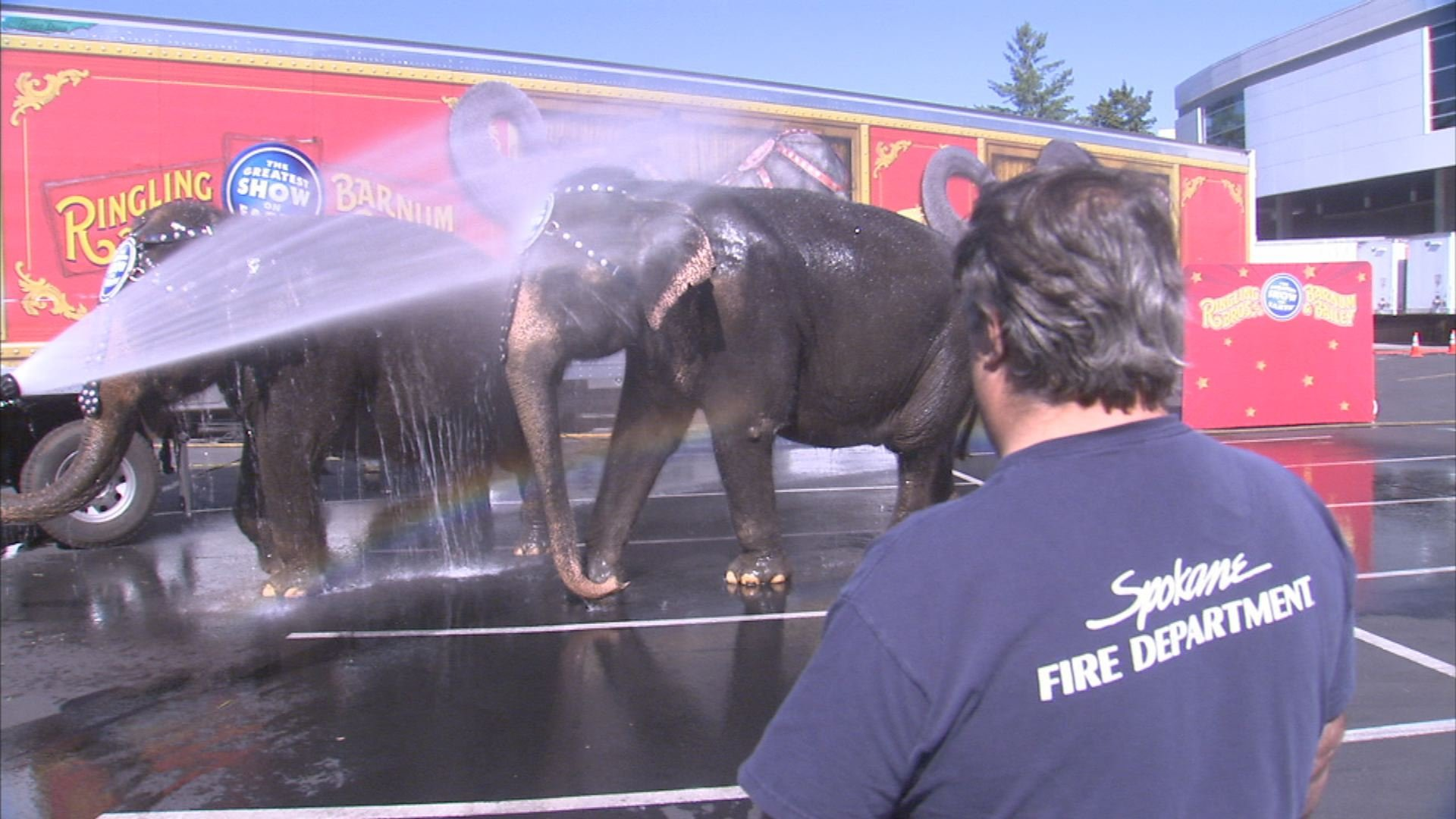 Firefighters from the Spokane Fire Department helped give circus elephants Patty and Carol a bath on Wednesday at the Spokane Arena