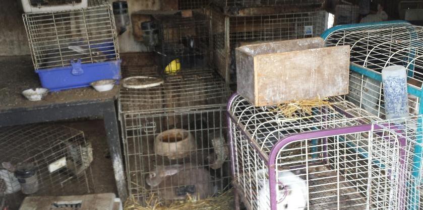 SCRAPS officers seize 148 animals