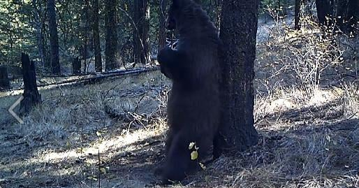Video and photo courtesy of the Washington Department of Fish and Wildlife