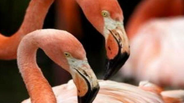 Police say a Mississippi college student has been arrested after bungled prank led to the deaths of two Chilean flamingos at the Hattiesburg Zoo.