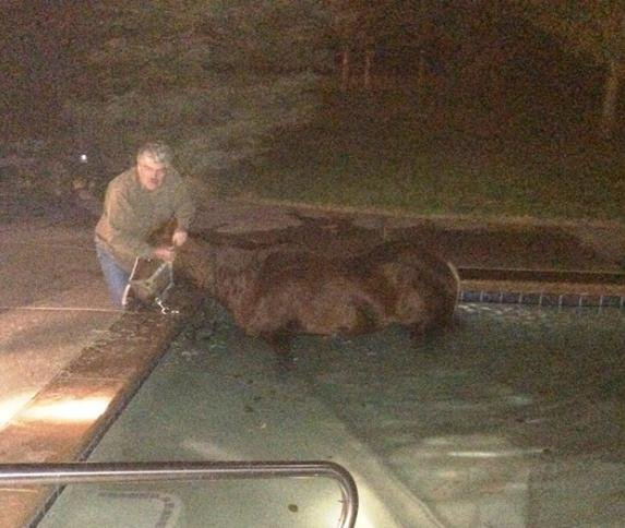 Horse rescued from pool