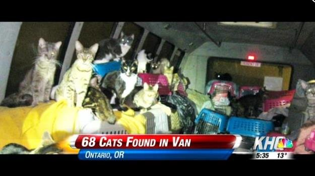 68 cats were found inside a can in Oregon.