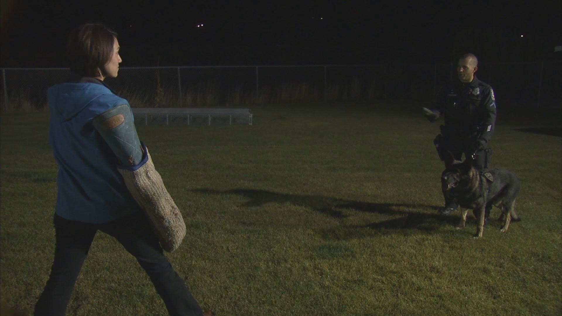 KHQ's Kalae Chock gets ready take on Talon from the Spokane Police Department's K9 Unit