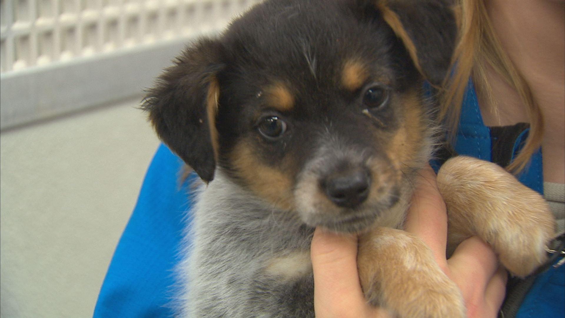 SpokAnimal is full of puppies! Go get one today!