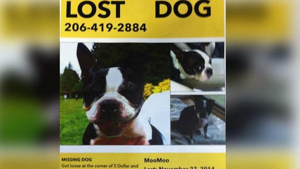 Have you seen MooMoo?