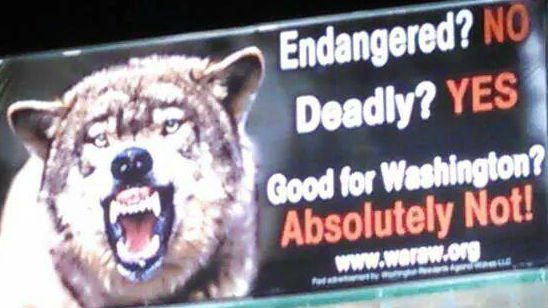 A billboard campaign in Washington aims to reignite a debate that splits the Pacific Northwest: Do wolves belong? Photo: Jim Sutton