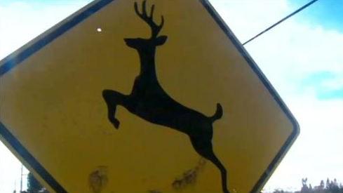 Deer are in no shortage in Dalton Gardens.