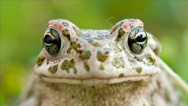 The recent study suggests that amphibians are most at risk with 41% of species threatened with extinction.