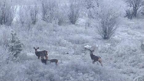 Snow has come to the Spokane region.