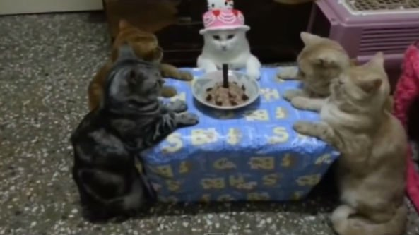The birthday cat and friends, Photo: YouTube
