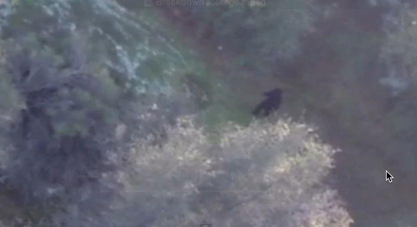 Black figure some claim is bigfoot spotted in norther California