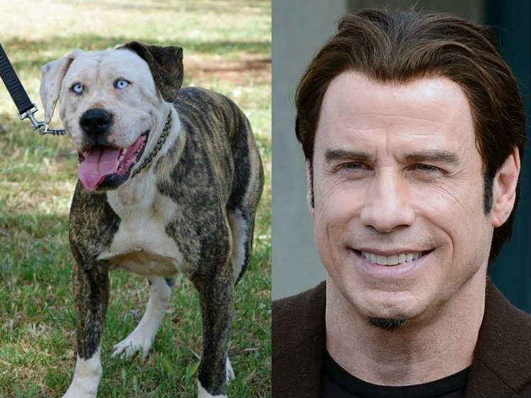 An animal rescue in Australia has a dog for adoption that looks just like John Travolta (PHOTOS: Boof from SA DOG RESCUE on Facebook, and Photo of John Travolta cropped from Georges Biard/Creative Commons 3.0)
