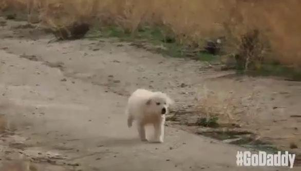The GoDaddy puppy finding its way back home. (PHOTO/VIDEO: YouTube/GoDaddy)