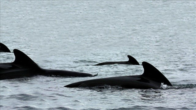 Washington OLYMPIA, Wash. (AP) - Washington state lawmakers are considering whether to outlaw keeping whales and dolphins captive for entertainment, even if the marine mammal was bred in captivity.