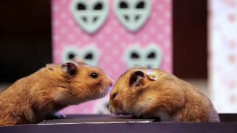 Tiny hamsters tiny date. Photo: YouTube/HelloDenizen