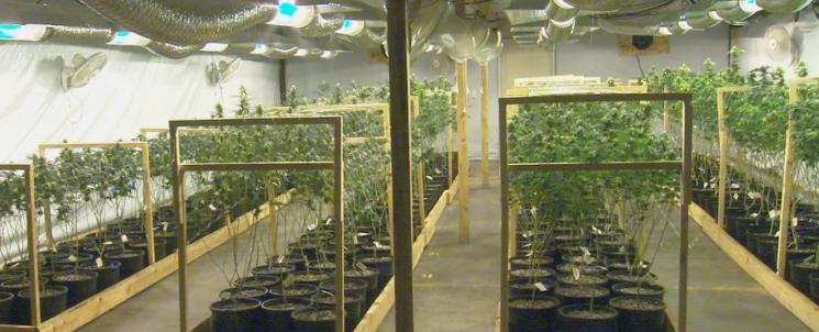 Farmer J's growhouse in Spokane Valley