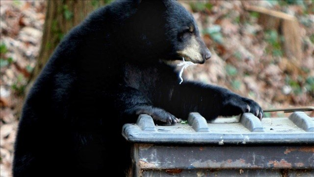 Snoqualmie, Washington, residents are being told to bear-proof their trash cans - or face the consequences.