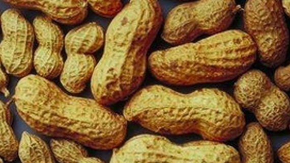 A new study suggests early exposure to peanuts may help build tolerance.