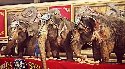 Feld Entertainment, says that the acts will be phased out by 2018, citing growing public concern about the animals' treatment.