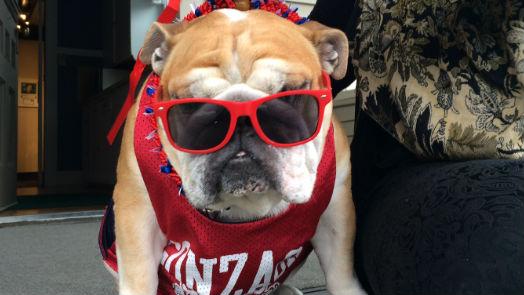 Gonzaga's unofficial mascot Maddie.