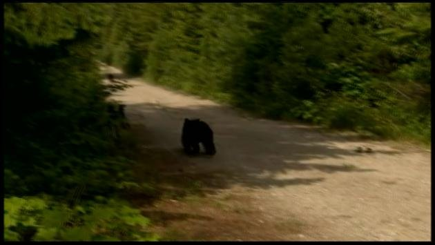 "Officials released the 2½-year-old cub nicknamed Cinder on Wednesday morning in a central Washington forest. He says the bear was in good shape and ""running like a champ"" near Wenatchee."
