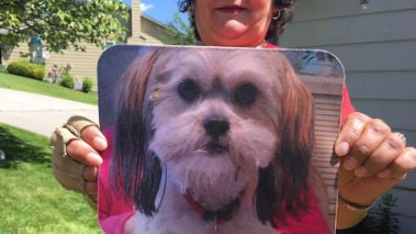 Faye Tutwiler says her dog was attacked by a coyote Friday morning while she was working in her garden.