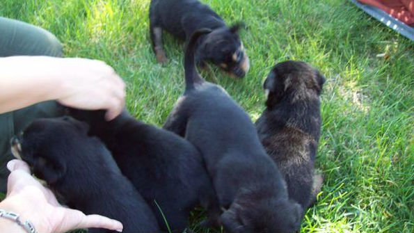 A litter of eight puppies were found abandoned in Corbin Park on Monday night.