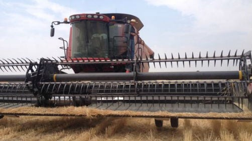Farmers report wheat is two to three weeks early thanks to dry conditions.