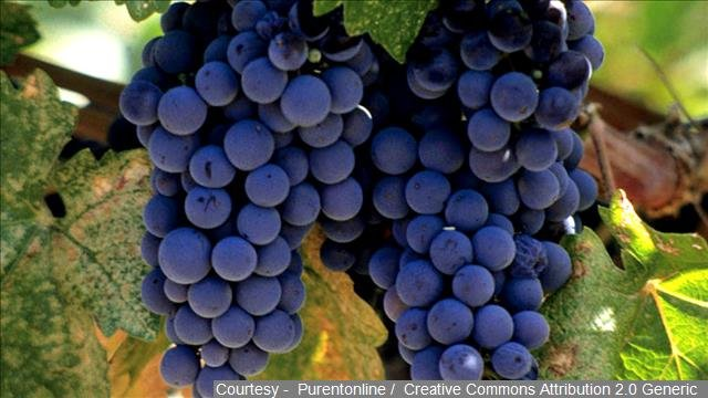 California's drought is drawing new attention to an old way of growing wine grapes.