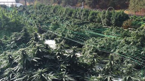 The harvest has begun at Buddy Boy Farms.