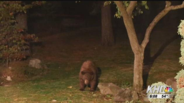 Two bear sightings in five days for one part of North Spokane. The first sighting was Friday, on five mile near North Birch Court, then Monday night and last night on Country Homes Boulevard.