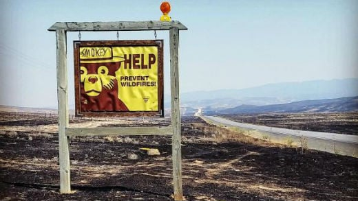 The Bureau of Land Management has released a rehab plan for the land burned in the Soda Fire. Photo: S. Hellstrom/Inciweb