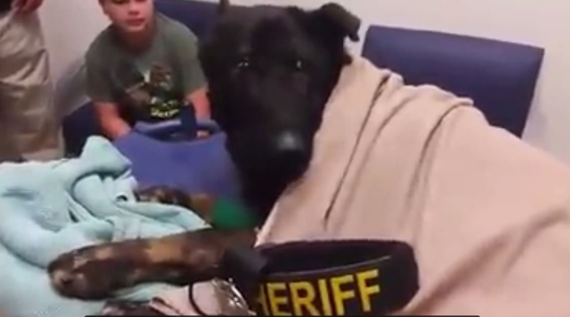 K9 Argo was honored with a Last Call in his final moments (PHOTO/VIDEO: Facebook/Hidalgo County Sheriff's Office)