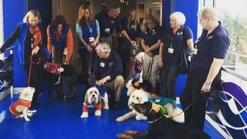 Costumed dogs are lightening up some hospital stays.