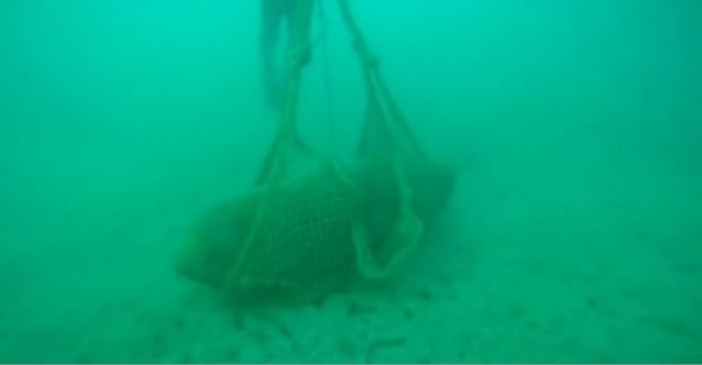 Divers safely disposed of this WWII bomb