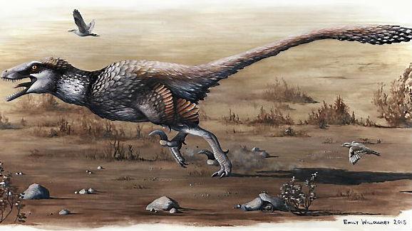 Artist's rendering of the Dakotaraptor. Photo: Emily Willoughby/University of Kansas