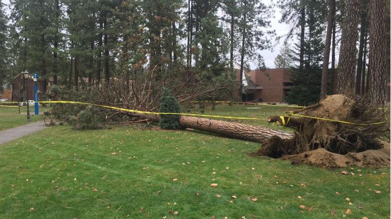 A tree down at Whitworth University (PHOTO: KHQ)