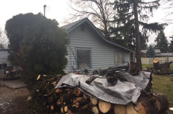 During the November 17th windstorm, an 100 foot tree fell in their front yard, narrowly missing their home.