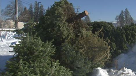 Christmas trees were being dropped off Saturday morning.