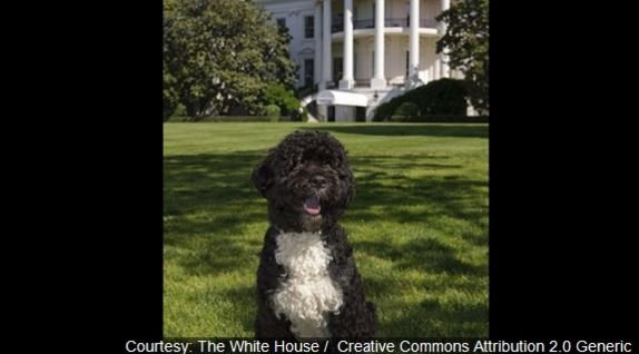 The first family has two Portuguese water dogs, Bo and Sunny.