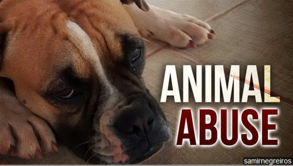 Best and Worst States for Animal Cruelty: Where Does Yours Rank?