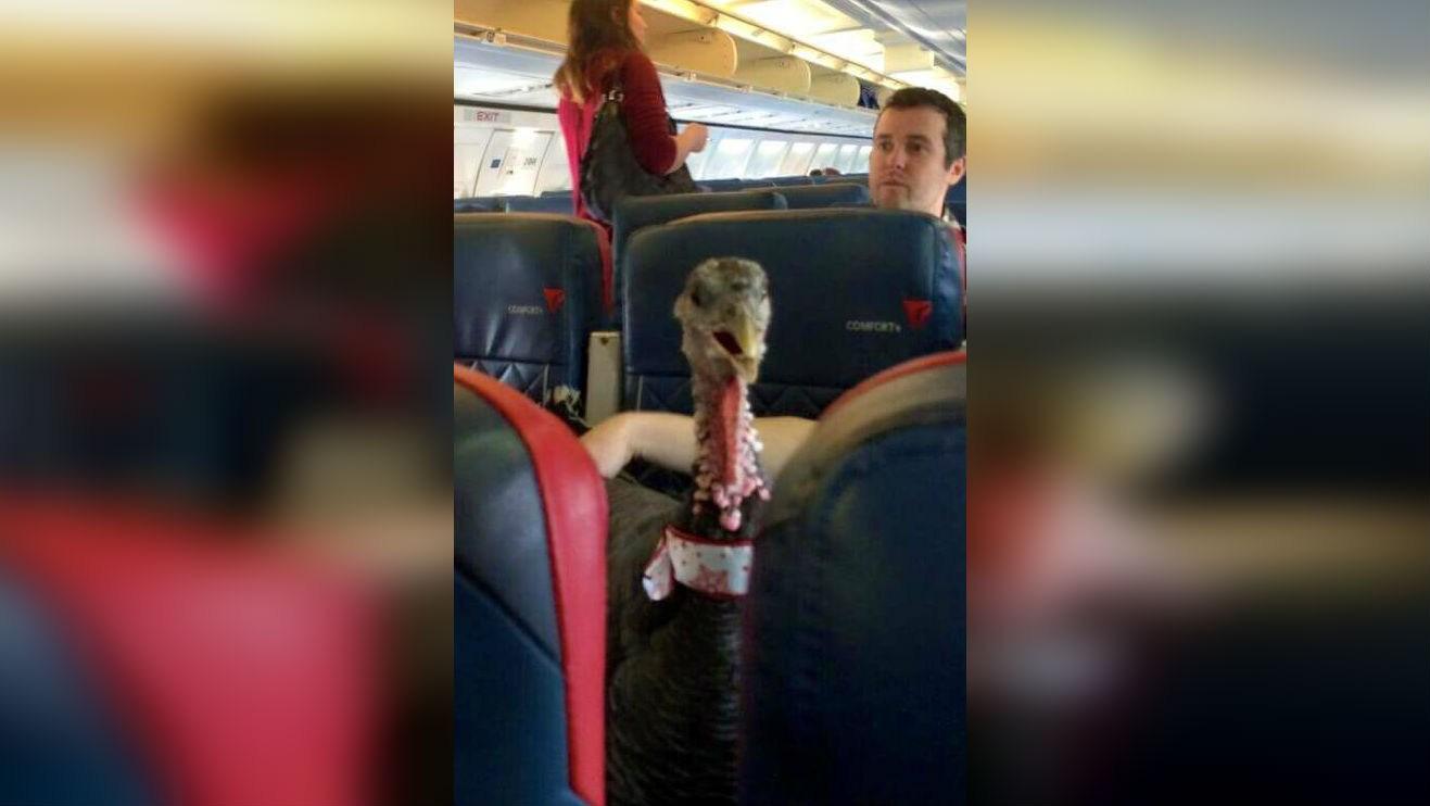 A turkey. On a plane. (PHOTO:  biggestlittlepickle/Reddit)