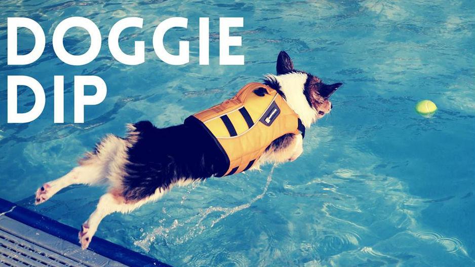Doggie Dips Coming To Spokane City Pools Nbc Right Now Kndo Kndu Tri Cities Yakima Wa
