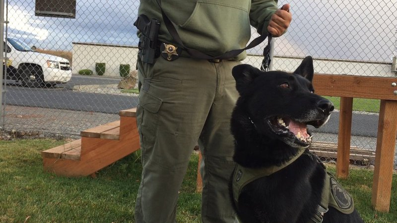 Funds running low for grant county k 9s nbc right now for Betterall motors yakima wa